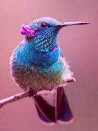 O beija flor representa na tradição tupi-guarani um elo de conexão entre os três mundos: mundo espiritual, mundo da alma, mundo terreno.